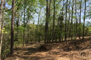 Springvale Recreational Tract with Homesite and Pond in Kershaw, SC (22 of 29)