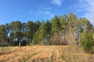 Beautiful Greenville County Homesite with Large Creek - Greenville County SC