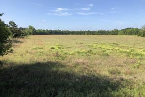 Brunson Open Fields Farm / Hunting / Homesite - Hampton County SC