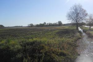 Dry Land Ag Tract - Bolivar County MS