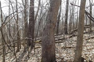20+ Recreational Acres Southwest Wisconsin in Grant, WI (20 of 23)
