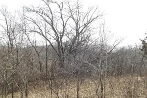 20+ Recreational Acres Southwest Wisconsin in Grant, WI (13 of 23)