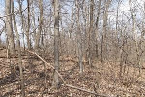 20+ Recreational Acres Southwest Wisconsin in Grant, WI (19 of 23)