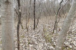 20+ Recreational Acres Southwest Wisconsin in Grant, WI (4 of 23)