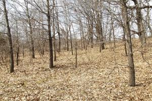 20+ Recreational Acres Southwest Wisconsin in Grant, WI (11 of 23)