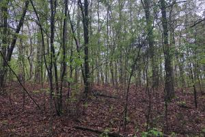 Lick Creek Timber and Hunting Property - Calhoun County MS