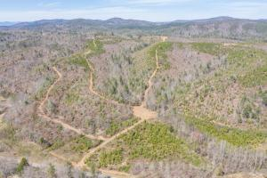 River Road Hunting and Timber Tract - Burke County NC