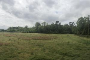Hunting and Farming Tract in Lee, SC (13 of 15)