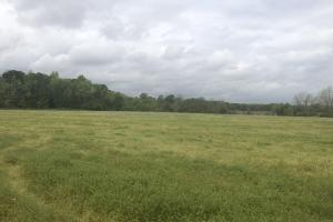 Hunting and Farming Tract in Lee, SC (6 of 15)