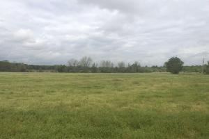 Hunting and Farming Tract in Lee, SC (12 of 15)