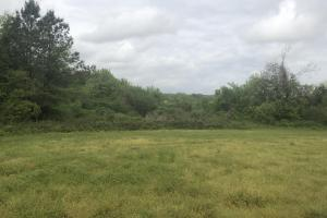 Hunting and Farming Tract in Lee, SC (11 of 15)