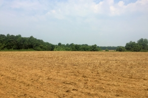Hunting and Farming Tract - Lee County SC