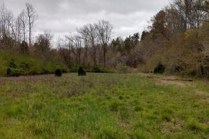 This field is perfect for a wildlife food plot. It sits right on the bank of the river.  (9 of 9)