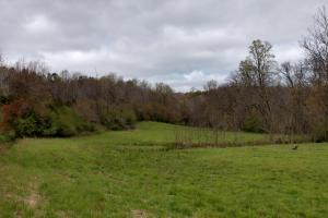 Second field on the property. Perfect for a big gobbler.  (8 of 9)