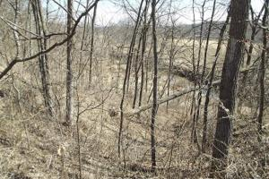 20+/- Acres Recreational Property, Hunting, Fishing, Hiking, Camping in Iowa, WI (17 of 17)