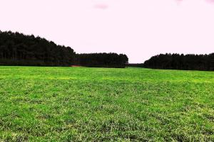 Large Cattle Farm with Timber in Pearl River, MS (15 of 29)