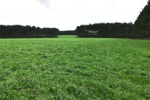 Large Cattle Farm with Timber - Pearl River County MS