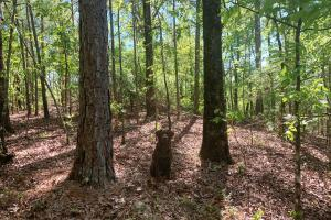 Westover Timber and Recreation Investment - Shelby County AL