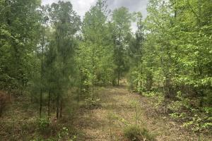 Sumter Homesite and Hunting Land in Sumter, SC (5 of 8)