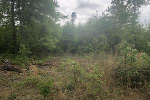 Sumter Homesite and Hunting Land in Sumter, SC (6 of 8)