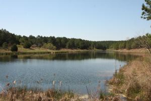 Bremen Recreational Tract in Cullman, AL (7 of 20)