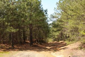 Bremen Recreational Tract in Cullman, AL (3 of 20)