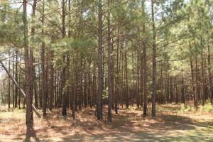 Bremen Recreational Tract in Cullman, AL (2 of 20)