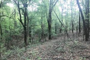 Fosters Homesite in Tuscaloosa, AL (11 of 15)