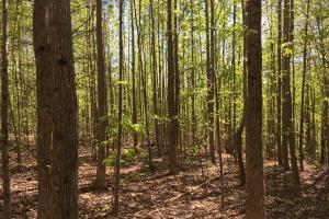 Johnson Creek Wooded Tract in Greenville, SC (21 of 39)