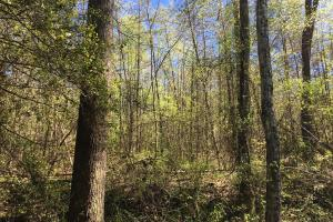 Johnson Creek Wooded Tract in Greenville, SC (13 of 39)