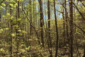 Johnson Creek Wooded Tract in Greenville, SC (33 of 39)