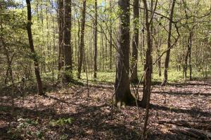 Johnson Creek Wooded Tract in Greenville, SC (2 of 39)