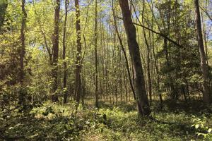 Johnson Creek Wooded Tract in Greenville, SC (12 of 39)