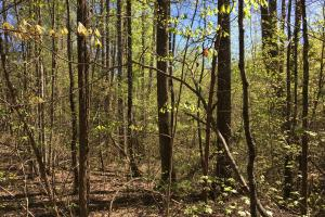 Johnson Creek Wooded Tract in Greenville, SC (35 of 39)