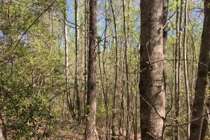 Johnson Creek Wooded Tract in Greenville, SC (37 of 39)