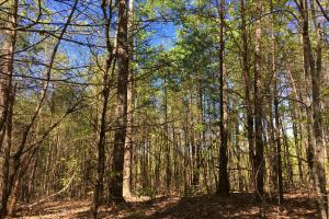 Johnson Creek Wooded Tract in Greenville, SC (25 of 39)