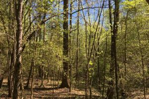 Johnson Creek Wooded Tract in Greenville, SC (24 of 39)