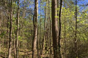 Johnson Creek Wooded Tract in Greenville, SC (34 of 39)