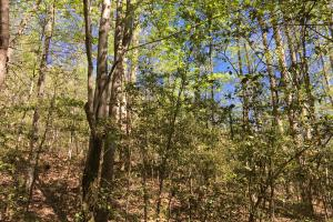 Johnson Creek Wooded Tract in Greenville, SC (31 of 39)