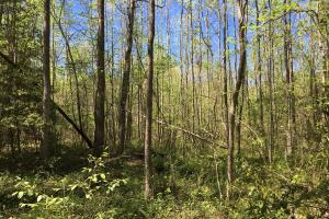 Johnson Creek Wooded Tract in Greenville, SC (15 of 39)