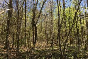 Johnson Creek Wooded Tract in Greenville, SC (11 of 39)
