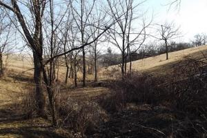 17+/- Acres Long-range views a spring, pasture and crop ground in Lafayette, WI (7 of 11)