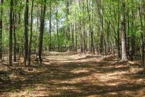 Wateree Creek Investment and Recreation Tract in Richland, SC (11 of 42)