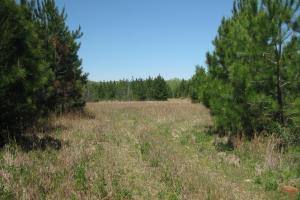 Large food plot or home site. (15 of 42)