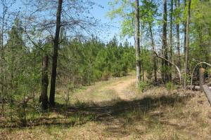 Wateree Creek Investment and Recreation Tract in Richland, SC (12 of 42)