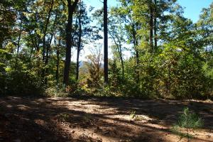 Panoramic Views from Multiple Knolls and Hardwood Forests in Buncombe, NC (17 of 43)