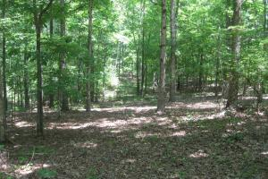 Mixed mature hardwoods cover a good portion of the tract. (15 of 29)