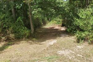 Large Wooded Recreational & Nature's Paradise in Montgomery, TX (5 of 14)
