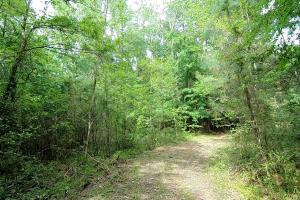 LARGE WOODED RANCHETTE HOMESITE- Tract 3 in Montgomery, TX (17 of 18)
