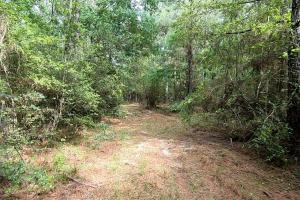 LARGE WOODED RANCHETTE HOMESITE- Tract 3 in Montgomery, TX (18 of 18)